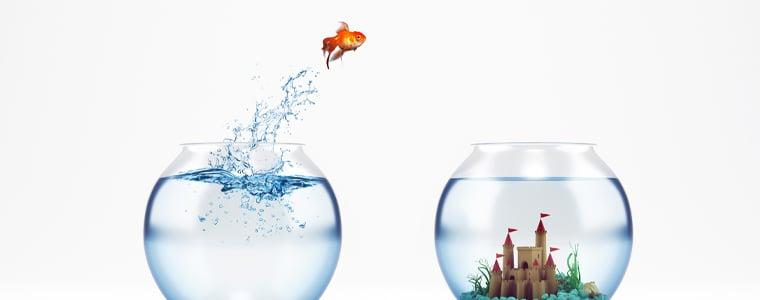 goldfish jumping from bowl to bowl