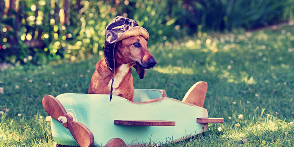 cute puppy sitting in wooden plane with flying hat